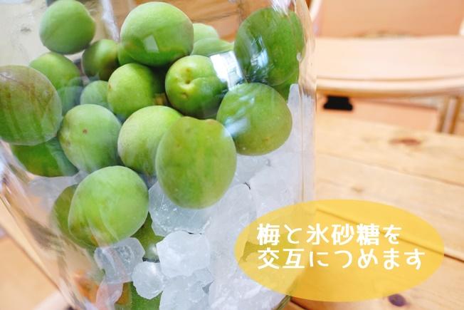 梅シロップの作り方 梅と氷砂糖を交互に