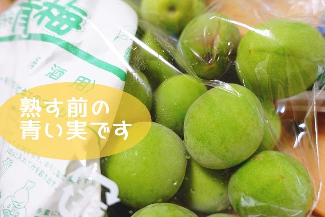 梅シロップの作り方 熟す前の青い実